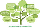 Sustainable-forestry-Harvesting 2020.jpg