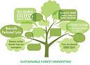 Sustainable-forestry-Harvesting 2020.jpg