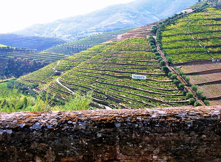 Douro Valley - best time to visit