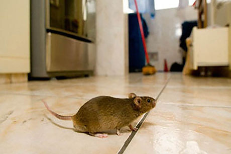 pest infestation in business or home.