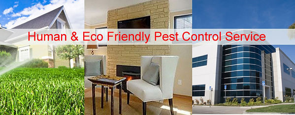 Royal pest control eco-friendly pest control solutions for the Wichita area.