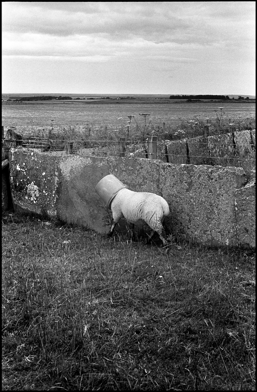 Ecosse 2001/2003 © Patrick Tombelle