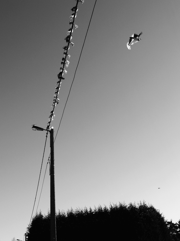 Belgium 2007 © Patrick Tombelle