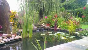 Cascade into pond