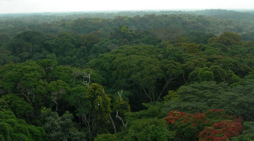 Ankasa%20Forest%20_Ghana_ElisaGrieco_edi