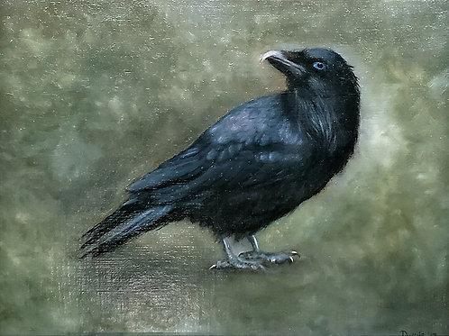 Raven - Photo Print