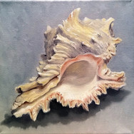Shell, 2017. Oil on canvas, 8x8