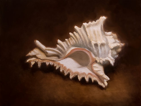 Sea Shell Study #1