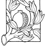 pomegranate_1.jpg