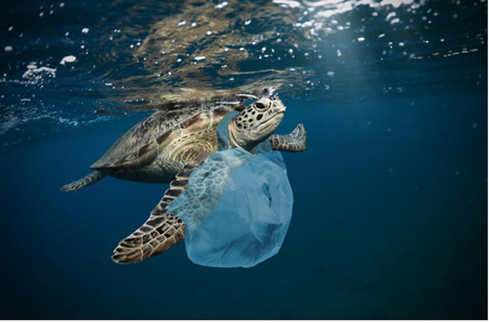 Tortue de mer étranglé par un sac plastique