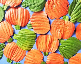 Hosta Pumpkins