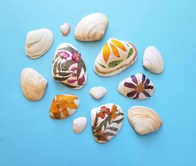 Pressed Flower Shells