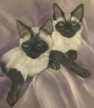 Siamese Cats - Nori and Sabi.jpg