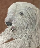 Mixed Sheepdog by Cathy Edwards