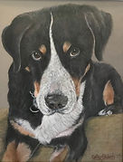 Great Swiss Mountain Dog by Cathy Edwards