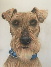 Airdale Terrier by Cathy Edwards