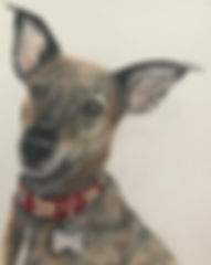 Brindle Greyhound.jpg
