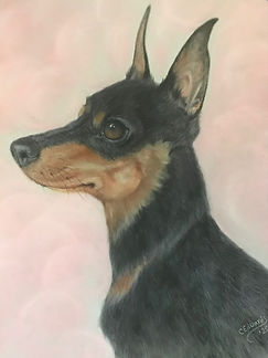 Minature Pinscher - Miss P.jpg