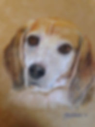 Barney the Beagle by Cathy Edwards