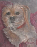 Shih Tzu by Cathy Edwards