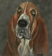 Basset Hound by Cathy Edwards