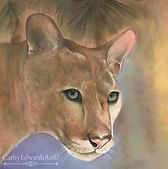 Florida Panther by Cathy Edwards