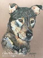 German Sheperd Dobie by Cathy Edwards