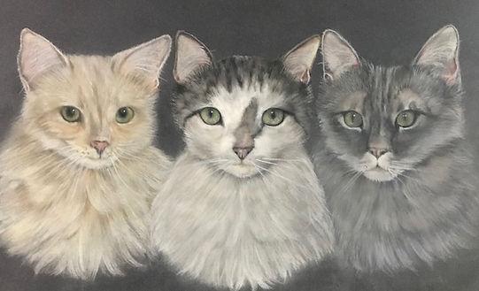 Three cats.jpg