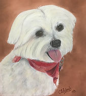 Benson - Maltese by Cathy Edwards