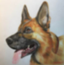 German Shepherd by Cathy Edwards