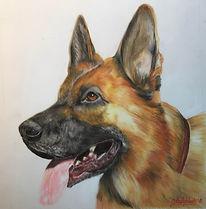 German Shepherd by Cathy Edwards