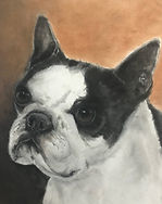 Boston Terrier-FINAL.jpg