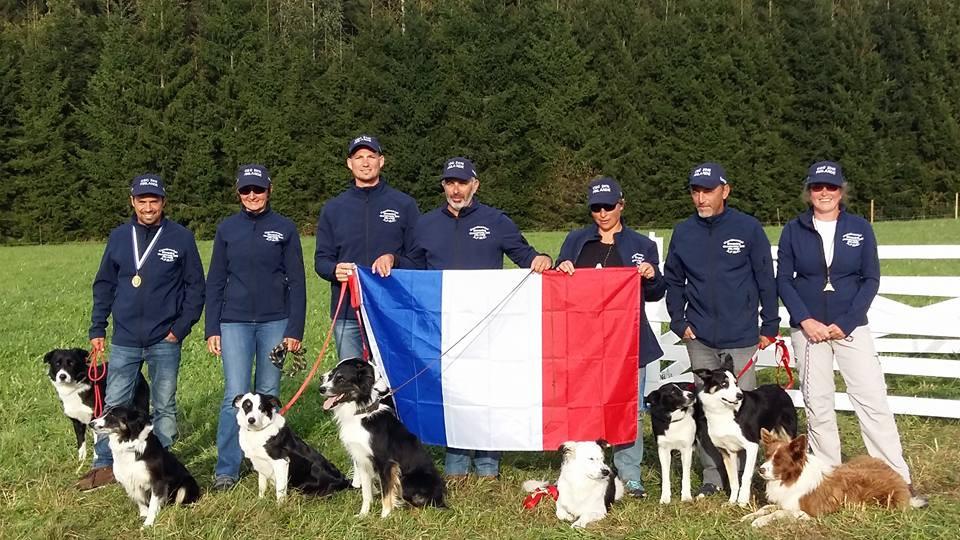 Equipe de France Continental Sheepdog Trial 2016