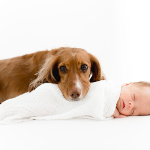 Un-posed newborn shoot featuring a pooch!