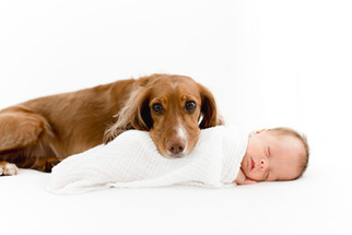 dog and newborn photogrpaher essex