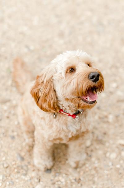dog photographer colchester essex london