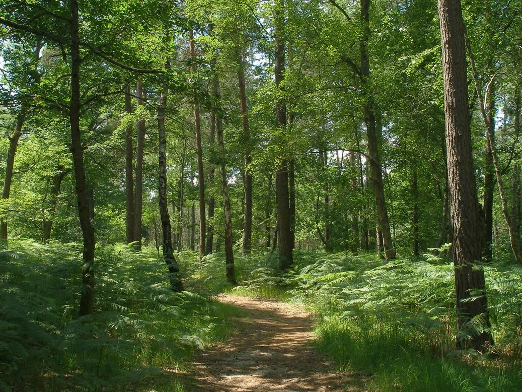 Forêt d'Orléans  8km