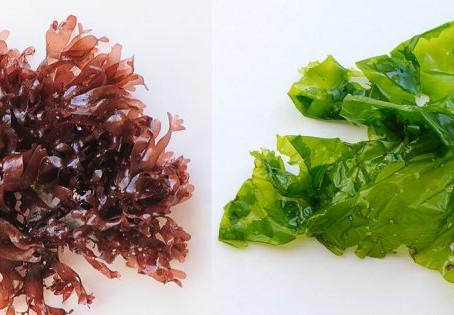 La Dulse, le bacon de la mer #dulce #healthyfood #eatclean