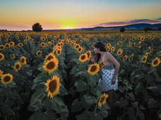 C sunset sunflowers.jpg