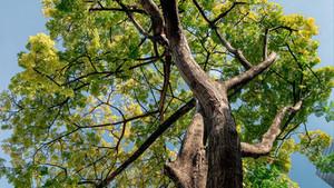 Дерево, ниспосланное свыше