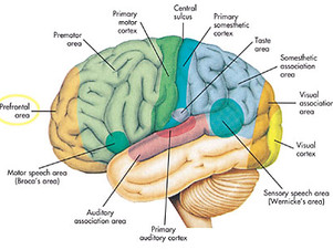 Sensory Nerves: Turning Them On!