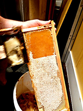 uncapping frame of honey at the honey stop