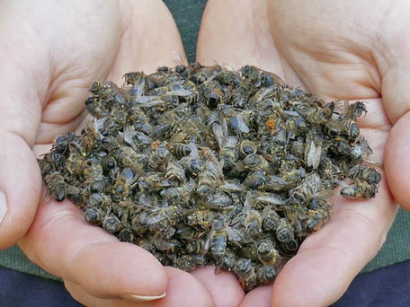 Here Nosema, See Nosema: Apiculture's Silent Killer