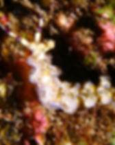 P6020122_l.jpg