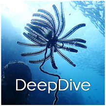 PADI Deep Dive Specialty