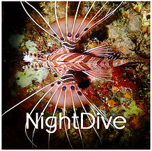 PADI Night Dive Specialty
