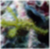 packages_08_l.jpg