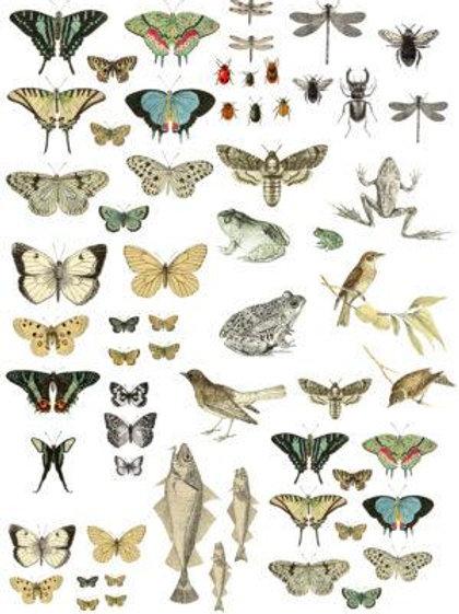 """Entomology Etcetera Transfer 24""""x33"""""""