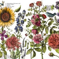 """Botanist's Journal 24""""x33"""" Decor Transfer"""