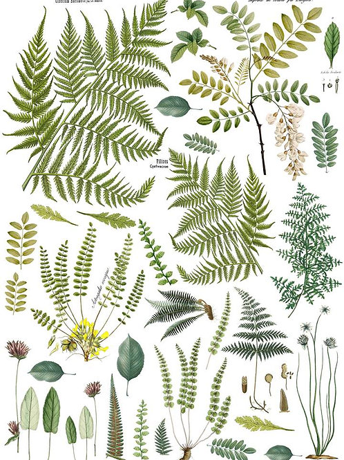 "Fronds Botanical Transfer 24""x33"